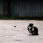 Koty Koneser