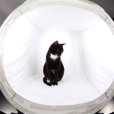Domowe studio fotograficzne – profesjonalne zdjęcia przy niewielkim wysiłku
